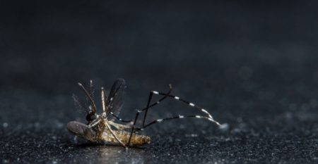 macro-mosquitoes-die_10221-3373